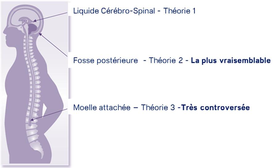 Les théories sur l'origine du Chiari( source @ conquier-chiari)